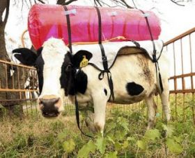 cowbackpacks