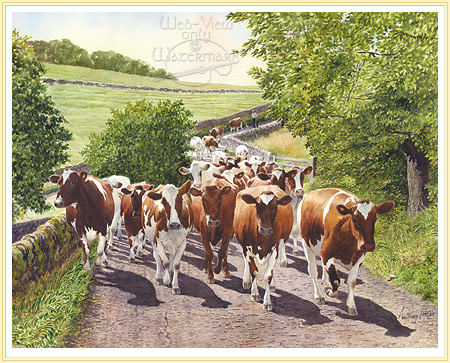 Cows-heading-home